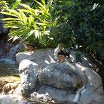 Ein Gehege mit Wasservögeln