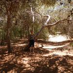 Maltas einziger Wald