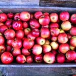 We gebruiken alleen onbespoten hoogstamfruit van oude fruitrassen: 60% peren en 40% appels.