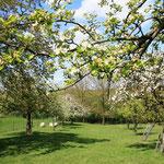 De boomgaard in Koulen