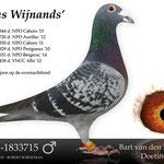 """""""Kras Wijnands"""". Verkregen van Team Eijerkamp. Won 13 prijzen op de fond waarvan 11 keer 1 0p 10."""