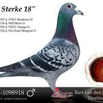 """""""De Sterke 18"""". Verkregen van Team Eijerkamp. Een prima vlieger op de dagfond en later ook op de marathon."""
