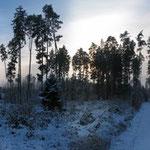 Tannwald im Winter