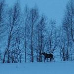 Kvitfjell, 24.+25.2.2017, die Suche hat sich gelohnt