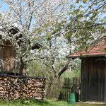 Das Baumhaus auf Stelzen