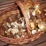 Noch ein mal Pilze