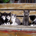 2008 als wir draußen noch Katzen hatten