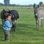 Die Esel waren neugierig und sind bis an den Zaun gekommen.