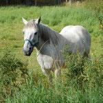 Eins der Pferde in der Bauerschaft.