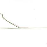 150°, 2013, Buntstift und Pflanzen auf Papier, 21×29,7cm