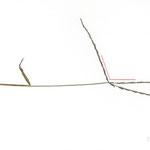 110°, 2013, Buntstift und Pflanzen auf Papier, 21×29,7cm