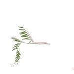 120°, 2013, Buntstift und Pflanzen auf Papier, 21×29,7cm