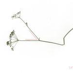 50°, 2013, Buntstift und Pflanzen auf Papier, 21×29,7cm