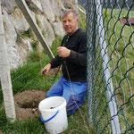 Josef Fischer (Weingut Fischer) beim Reben setzen