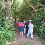 マングローブの林へ突入