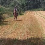 Auf dem Feld