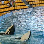 Orka-Show, Loro Park, Puerto de la Cruz, Teneriffa