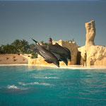 Delfinshow, Loro Park, Puerto de la Cruz, Teneriffa