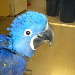 Papagei, Loro Park, Puerto de la Cruz, Teneriffa