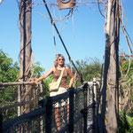 Hängebrücke, Jungle Park, Arona, Teneriffa