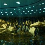 Pinguine, Loro Park, Puerto de la Cruz, Teneriffa