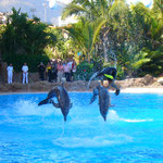 Delfin-Show, Loro Park, Puerto de la Cruz, Teneriffa