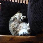 la chatte Flamme de la ferme de la Simonnière