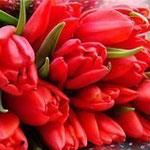 Тюльпаны - Овен