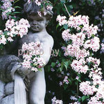 44:花と噴水 @イギリス・コッツウォルズ地方