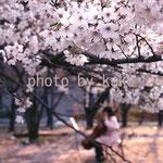 21:桜とチェロ @東京