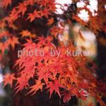 80:紅葉 @京都