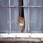 52:窓辺のネコ @イギリス・コーンウォール地方