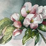 """aquarell 10x15 cm - """"apfelblüte"""""""