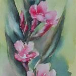 aquarell - oleander
