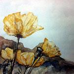 aquarell - bergmohn
