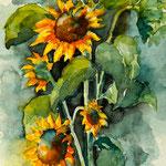 aquarell - sonnenblumen