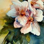 aquarell - hibiskus