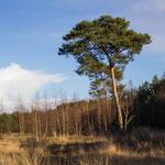 Natuurgebied Kattenbosserheide Lommel Belgisch Limburg