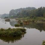 Natuurgebied Het Vinne Zoutleeuw Brabant België