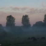 Natuurgebied Schulensmeer Lummen Belgisch Limburg