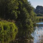 Natuurgebied De Luysen Bree Limburg België