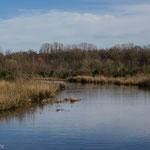 Natuurgebied Bergerven Rotem Limburg België