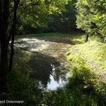 Der stark beschattete Teich vor der Entfichtung