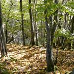 Hundsbachtal bei Lissingen- Blick hangabwärts in den Waldbestand