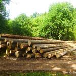 Auf Polter gelegte Fichtenstangen am Rande des Waldes
