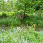 Biberburg des Elbebibers im Biosphärenreservat Mittelelbe 30.05.2014