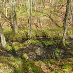 Hundsbachtal bei Lissingen- Bachaue des Hundsbaches als südliche Grenze der Grundstücke