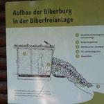 Aufbau der Biberbeobachtungshütte (Foto: Hanne Uedelhoven)