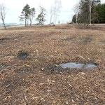 Gerodete und vorbereitete Fläche für die Borstgrasrasen-Ansaat