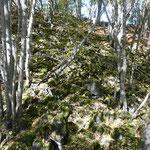 Blick in den Blockschuttwald mit Basalt-Blockschutt